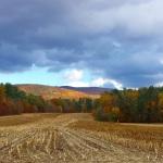cornfield 3